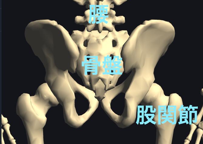 5つの骨で出来ているのが骨盤