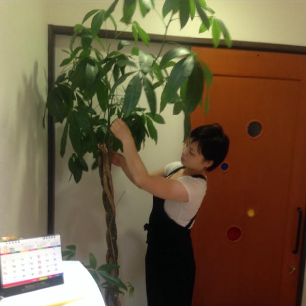 高く伸びた観葉植物